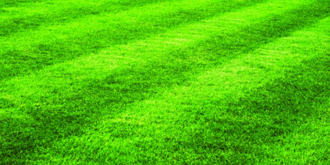 When to Start Your Spring Lawn Maintenance in Alaska, Anchorage, Alaska
