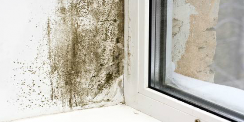 Mold Remediation Experts Describe the Perfect Conditions for Mold Growth, Forest Park, Ohio