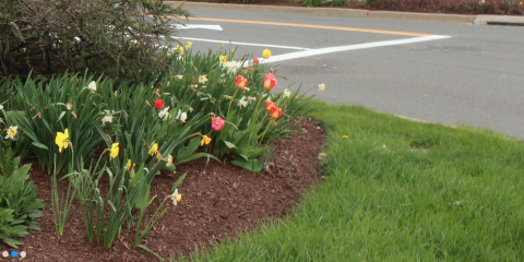 The Top 3 Things to Look for in a Landscaping Service, Danbury, Connecticut