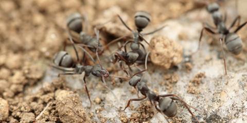 3 Warning Signs You Need Ant Control Treatment, Pahoa-Kalapana, Hawaii