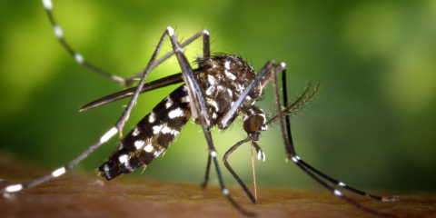 5 Mosquito Diseases to Be Aware of This Summer, Swift Creek, North Carolina