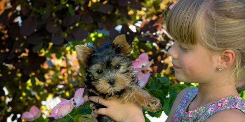 Important Puppy Care Advice for New Pet Parents, Perry, Georgia