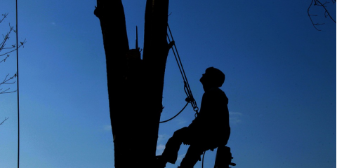 3 Benefits of Professional Tree Removal, Victor, New York