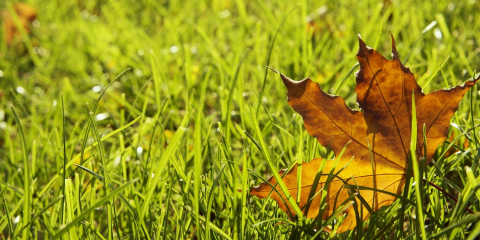 3 Reasons to Hire a Professional for Landscape Cleanup This Fall, Missouri, Missouri