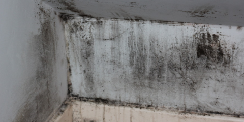 What Should You Do When You Find Black Mold?, Columbia, Missouri