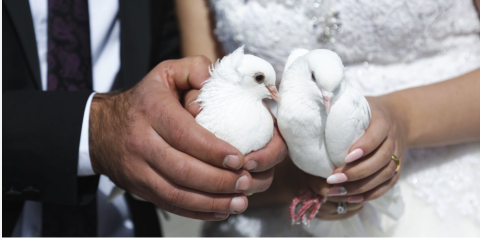 Where Do White Doves Go After They Are Released?   , Covington, Kentucky