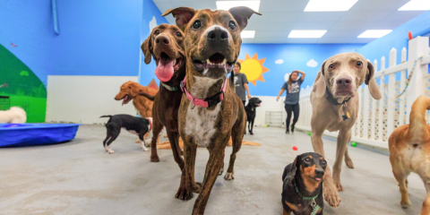Why You Should Socialize Your Dog, Honolulu, Hawaii