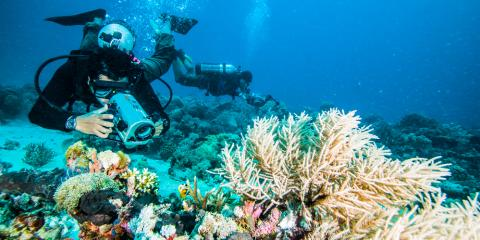 Visiting Oahu With a Group? Book a Scuba Diving Charter!, Honolulu, Hawaii