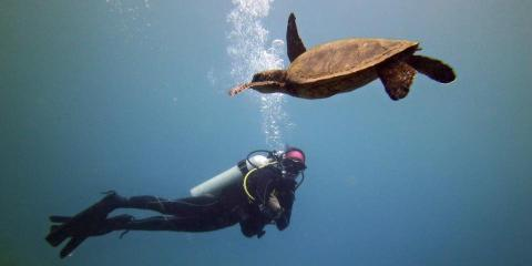 3 Ways to Stay Warm While Scuba Diving, Honolulu, Hawaii