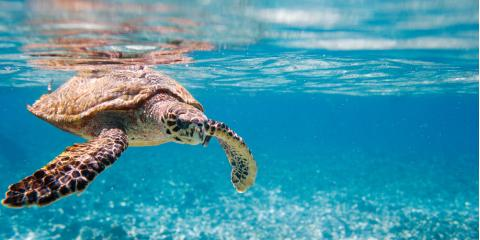 You Don't Have to Be a Pro to Go Scuba Diving with Sea Turtles!, Honolulu, Hawaii