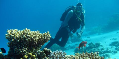 Scuba Diving Alert: How To Spot & Avoid Painful Coral Stings, Kettering, Ohio