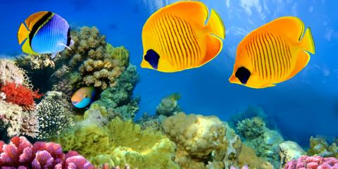 5 types of fish to look for while scuba diving in hawaii for Types of fish in hawaii