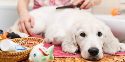 5 Reasons to Schedule Professional Dog Grooming, Seattle, Washington