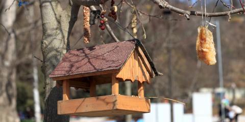 3 Common Backyard Birds in Oregon, ,