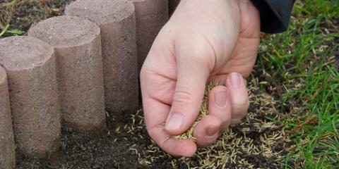 How Winter Seeding Can Benefit Your Lawn, Saltillo, Nebraska