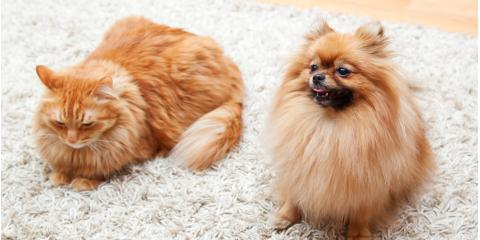 3 Carpet Cleaning Tips for Pet Owners , Southeast Guadalupe, Texas