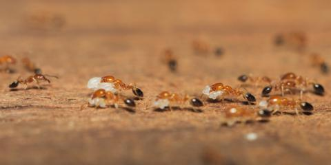 Pest Control: 3 Easy Ways to Tell the Difference Between Termites & Ants, Hebron, Kentucky