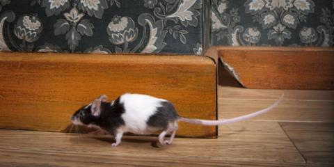 Cincinnati Exterminator Explains 3 Ways Mice Infiltrate Homes, Miami, Ohio
