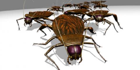 Select Pest Control, Pest Control, Services, Hebron, Kentucky