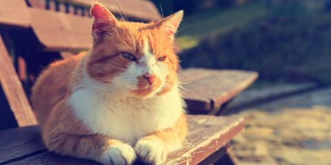 3 Senior Cat Care Tips to Keep Your Pet Healthy, Penfield, New York