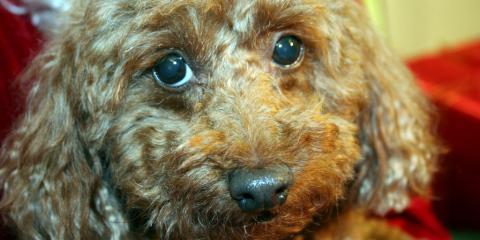 Senior Pet Care 101: How to Care For Your Aging Pet, Gulf Shores, Alabama