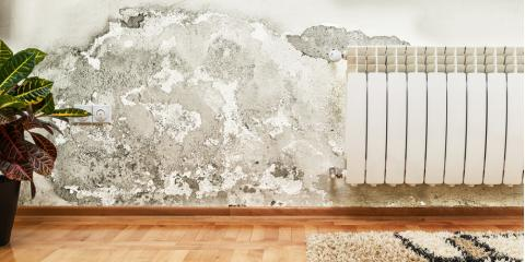 What Steps Are Involved in the Mold Removal Process?, Richmond Hill, Georgia
