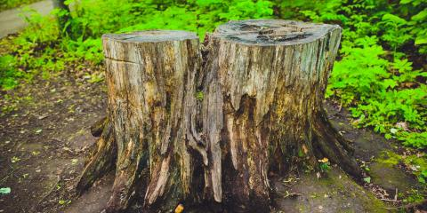 Should I Choose Stump Grinding or Removal?, Seymour, Connecticut