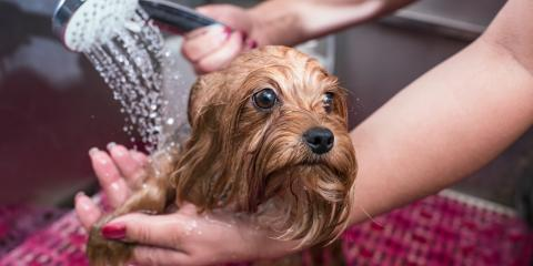 How to Groom Your Dog for Spring, Miami, Ohio