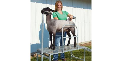 Choosing the Right Animal Clippers for Showing Livestock, Seventy-Six, Iowa