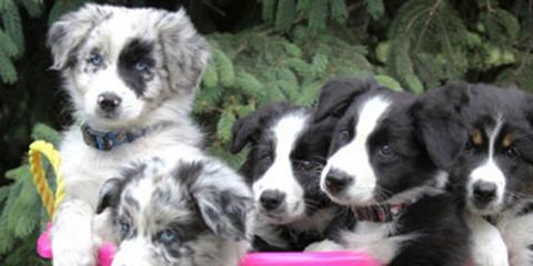 Merck Animal Health Safe-Guard® Canine DeWormer Coupon, Clifton, Texas