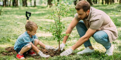 Do's & Don'ts of Taking Care of a New Tree, Honolulu, Hawaii