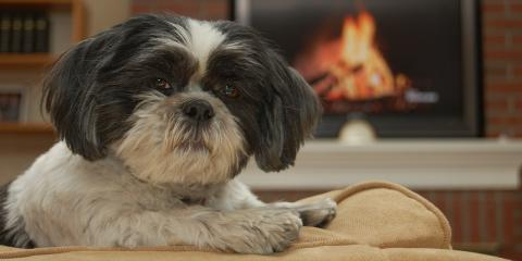 4 Tips for Winter Animal Skin Care From Cincinnati's Best Pet Dermatologist, Sharonville, Ohio