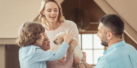 7 Supplies Every New Puppy Parent Needs, Oyster Bay, New York