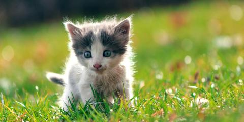 Should You Let Your Cat Go Outside? , Newport-Fort Thomas, Kentucky