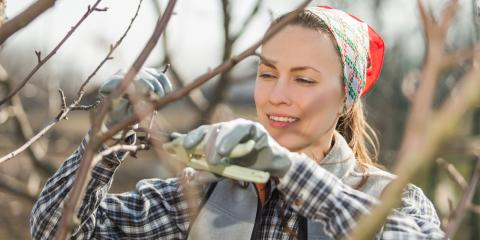 Why Should You Prune Your Trees & Shrubs?, Trumbull, Connecticut