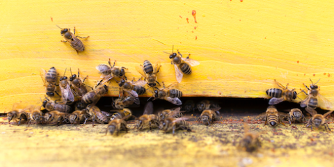 Bees Buzzing Around Your Home? You May Need New Siding, Lincoln, Nebraska