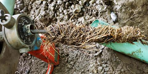 Even Small Tree Roots Can Cause Plumbing Problems In Carrollton, Carrollton, Texas