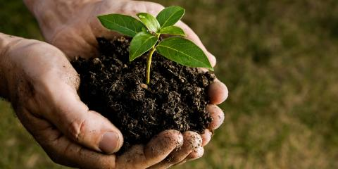 The Basics of Using Great Soil on Your Garden, Pueblo, Colorado