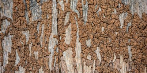 3 Signs You Have Termites, North Haven, Connecticut