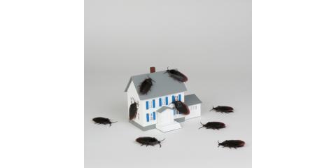 SK Pest Elimination LLC, Exterminators, Services, North Haven, Connecticut
