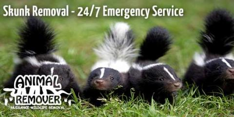 Why It's Necessary to Call Animal Control When You Have a Skunk Problem, Anderson, Ohio