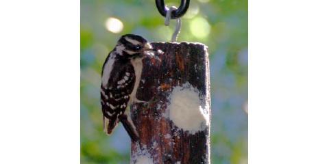 7 Basic Backyard Bird Feeders Series - #5 Suet Bird Feeders, Lincoln, Nebraska