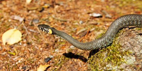 Snake Removal: How to Keep These Reptiles Off Your Property, Miami, Ohio