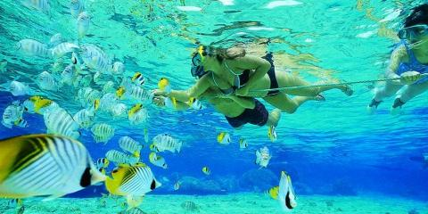 3 Reasons Snorkeling in Miami Is for You , Miami Beach, Florida