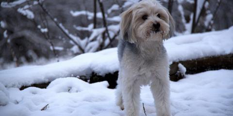 (Urgent) Closed Tomorrow 2/9 for Snow Day, Manhattan, New York