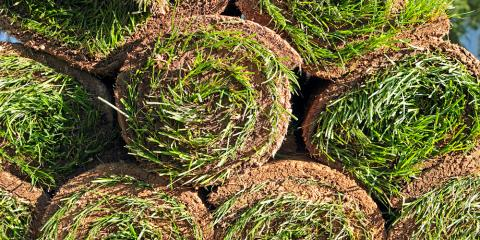 Why Should You Install Sod On Your Property?, Lincoln, Nebraska