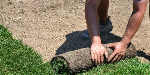 Prepare Your Lawn for Winter., Hill, Arkansas