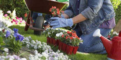 4 Tips to Help a Garden Survive the Summer Heat, Henrietta, New York