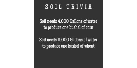 Soil Trivia #4, Brandon, Florida