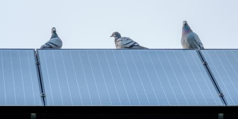 How to Keep Birds Away From Solar Panels, Honolulu, Hawaii